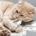 Radin, panier percé : pouvons-nous vraiment changer notre relation à l'argent ?