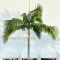 Bottega Veneta, 50 ans de luxe à contre-courant