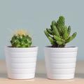 Conseils beauté : comment utiliser l'huile de cactus en soin visage