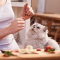 Est-il bien raisonnable de cuisiner pour son chat ?
