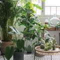Bien choisir ses plantes d'intérieur quand on n'a pas la main verte