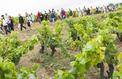 Vignes, Vins, Randos : 15ème édition !