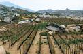 Les vins grecques, grands crus des Cyclades