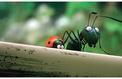 Minuscule, la vallée des fourmis perdues : un travail de précision