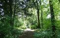 Forêt, l'autre manière d'investir