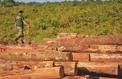 L'impact méconnu de la déforestation sur les précipitations