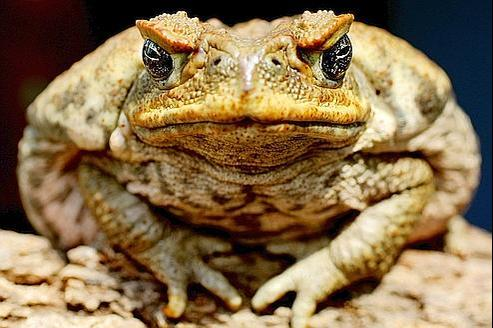 the theme of death in the death of a toad by richard wilbur By richard wilbur the text of this poem may be found online here the death of a toad edit classic editor history talk (0) share by richard wilbur.