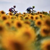 Tour de France 2019, 11e étape : Tour et tournesols