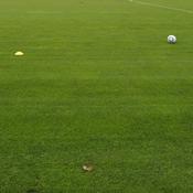 Violences : Un club amateur rétrogradé, un joueur suspendu douze ans