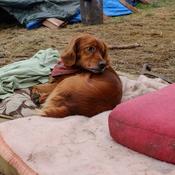 Mondial 2018 : des milliers de chiens et chats abattus dans les villes hôtes ?