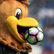 Baggie Bird