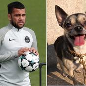 Dani Alves lance un appel sur les réseaux sociaux pour retrouver son chien
