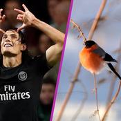 Quand Cavani quitte Paris pour observer les oiseaux