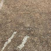 La pelouse du stade de Lorient dévastée par un champignon