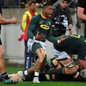 Rugby Championship : Des Springboks héroïques font tomber les All Blacks