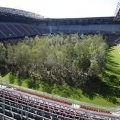 Une forêt plantée au milieu d'un stade de foot
