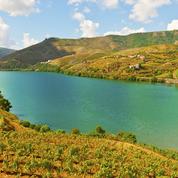 L'Italie confiante de demeurer le plus gros producteur de vin