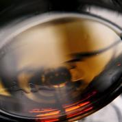 Cognac: bientôt une règlementation contre les transferts de droits à plantation