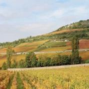 Bourgogne: un couple d'Américains reprend l'exploitation d'un 1er cru à Pommard