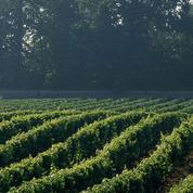 Primeurs à Bordeaux : le millésime 2016 s'est bien vendu mais en moindre quantité après le gel