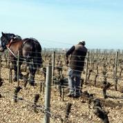 Bordeaux supérieur contre «Bord'eaux inférieur»