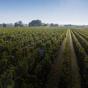AOC Pomerol : Les propriétaires de vignes peuvent vinifier en dehors de l'aire géographique
