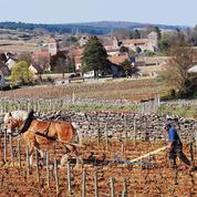 Très chère Bourgogne