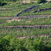 Le vignoble d'Auvergne en pente douce