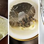 Du terroir aux bulles, les vignerons de Champagne mettent l'authenticité en bouteille