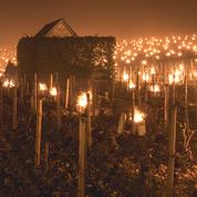 En Bourgogne : le vignoble lutte contre le gel