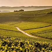 Millésime 2017 : ménagée par les éléments, la Bourgogne retrouve le sourire