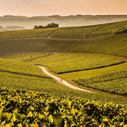 Balade viticole en Bourgogne : l'Yonne-Chablis