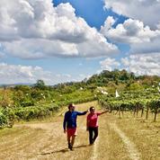 Le vignoble thaïlandais : inoubliable et inclassable