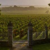 Vendanges de Bordeaux: qualité mais quantité réduite par la grêle et le mildiou