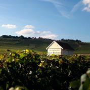 Louis Roederer de la vigne au vin