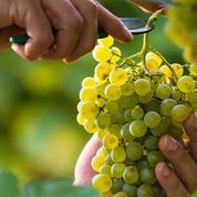 Connaissez-vous les vignobles du monde?