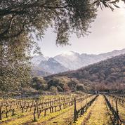 Êtes-vous un expert des vins corses ?