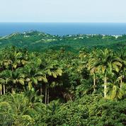 Mount Gay, pépite des Caraïbes