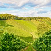 Un vin de Bourgogne, coqueluche des Britanniques après le mariage du prince Harry et Meghan Markle