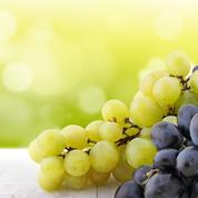 Que savez-vous sur les vins bios, biodynamiques et naturels ?
