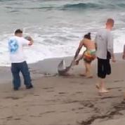 Un homme sort un requin de l'eau pour une photo