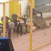Un léopard sème la panique dans une école en Inde
