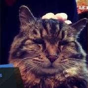 Corduroy, le chat le plus vieux du monde