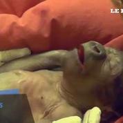 La naissance très rare d'un bébé gorille par césarienne émeut le Royaume-Uni