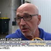 Pyrénées-Atlantiques : le directeur de l'abattoir affirme ne pas être au courant des maltraitances dénoncées par une association