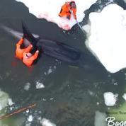 Russie: ils sauvent 4 orques prises au piège de la banquise