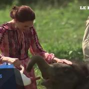 Inde : Kate et William donnent le biberon à des animaux orphelins