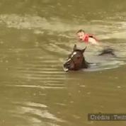 Texas : des dizaines de chevaux sauvés de la noyade
