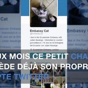 Un chaton pour tenir compagnie à Julian Assange