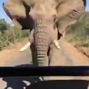 Arnold Schwarzenegger chargé par un éléphant en Afrique du Sud